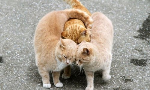 animal-love-friendship-101__880r