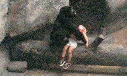 parintii-unui-copil-de-trei-ani-au-inghetat-de-spaima-o-gorila-si-a-riscat-viata-ca-sa-le-salveze-copilul_1_1r